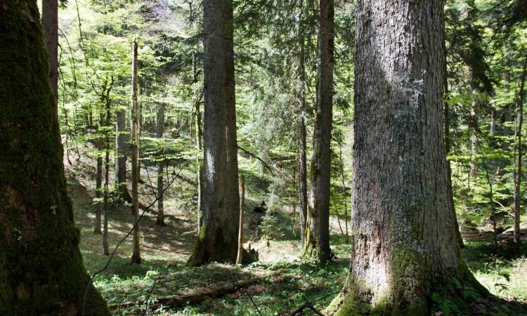 Svjetski dan okoliša u KS posvećen prašumi Ravna Vala na Igmanu